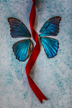 Des Panteva BLUE BUTTERFLY WINGS WITH RED RIBBON Insects