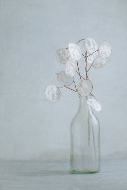 Magdalena Wasiczek Old glass bottle with dried plant