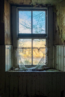 David Baker Window in abandoned house