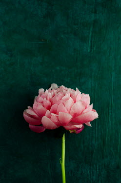 Cristina Mitchell Pink flower on green background