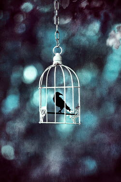 Kelly Sillaste BLACK BIRD IN CAGE WITH SUNLIGHT Birds