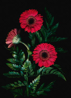 Magdalena Wasiczek close up of red flowers and green fern Flowers