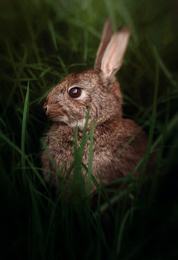 Amy Weiss CLOSE UP OF BROWN HARE Animals