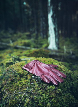 Mark Owen LEATHER GLOVE LYING ON MOSSY STONE IN FOREST Miscellaneous Objects