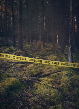 Mark Owen POLICE TAPE IN MOSSY FOREST Trees/Forest