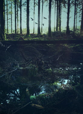 Mark Owen STREAM IN FOREST WITH FLYING BIRDS Trees/Forest
