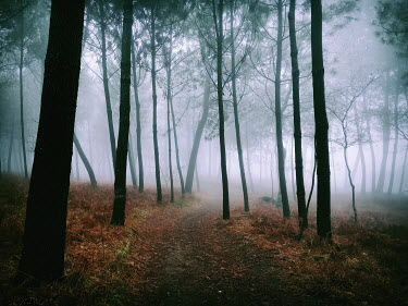 Guillermo Rodriguez Carballa Trees in foggy forest
