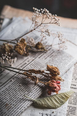 Magdalena Wasiczek dried flowers and old newspapers