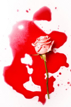 Magdalena Wasiczek rose and blood