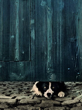 Maria Petkova Dog peering under wooden gate