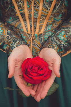 Joanna Czogala CLOSE UP OF FEMALE HANDS HOLDING RED ROSE Women