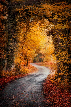 Evelina Kremsdorf EMPTY COUNTRY ROAD IN AUTUMN Paths/Tracks