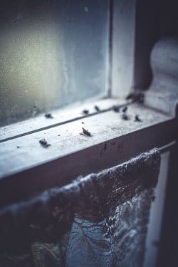 Marie Carr DEAD FLIES LYING ON OLD WINDOW Insects