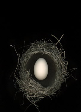 Magdalena Russocka egg in birds nest