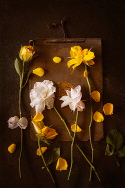 Magdalena Wasiczek roses with scattered petals on old book Flowers