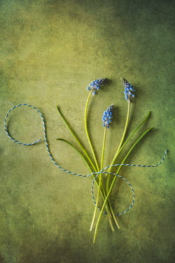 Magdalena Wasiczek blue flowers with string from above Flowers