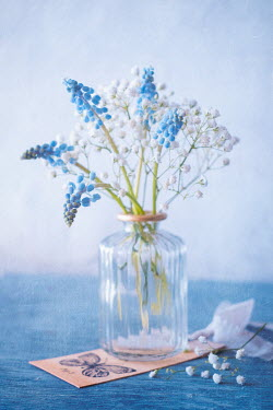 Magdalena Wasiczek Blue and white flowers in glass vase Flowers