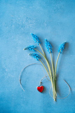 Magdalena Wasiczek blue flowers of muscari and heart-shaped pendant Flowers