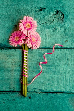 Jane Morley THREE PINK FLOWERS TIED WITH PINK RIBBON Flowers