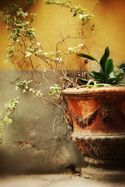 Irene Lamprakou PLANTS IN TERRACOTTA URN BY WALL Flowers