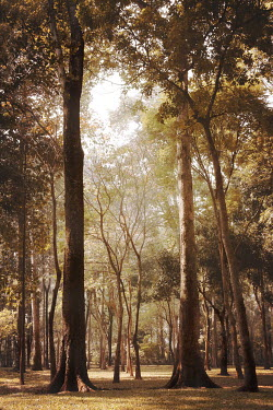 Irene Lamprakou TALL TREES AND SUNLIGHT Trees/Forest