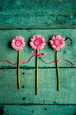 Jane Morley THREE PINK FLOWERS WITH RIBBON FROM ABOVE Flowers