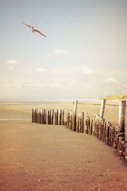 Victoria Davies Seagull flying over wooden fence on beach