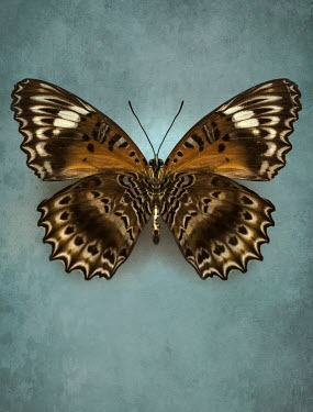 Jaroslaw Blaminsky CLOSE UP BROWN PATTERNED BUTTERFLY Insects