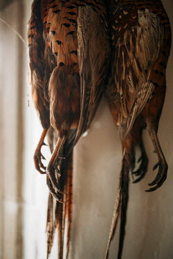 Shelley Richmond BRACE OF PHEASANTS HANGING INDOORS Miscellaneous Objects