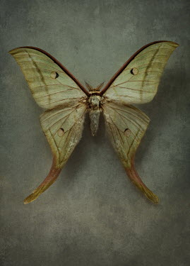 Jaroslaw Blaminsky CLOSE UP OF WHITE MOTH Insects