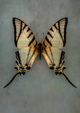 Jaroslaw Blaminsky CLOSE UP OF EXOTIC PATTERNED BUTTERFLY Insects
