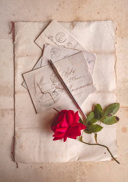 Jane Morley RED ROSE ON OLD LETTERS Flowers
