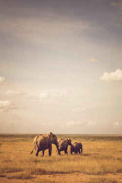 Joanna Czogala THREE ELEPHANTS IN REMOTE LANDSCAPE Animals