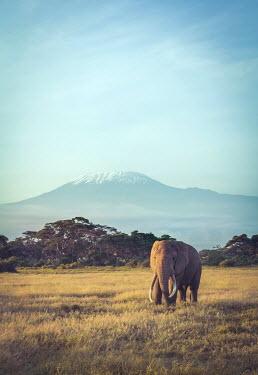 Joanna Czogala ELEPHANT IN LANDSCAPE WITH SNOWY MOUNTAIN Animals