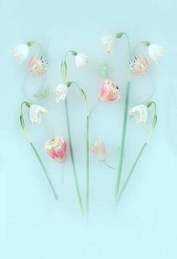 Magdalena Wasiczek PINK FLOWERS IN MILKY FLUID Flowers