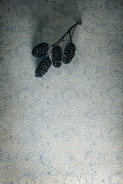 Sally Mundy DRIED FIR CONES ON BLUE PATTERNS Flowers