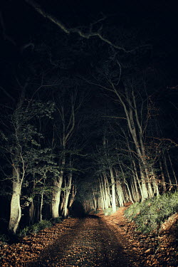 Magdalena Russocka empty road in forest at night Paths/Tracks