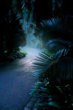 ILINA SIMEONOVA EMPTY ROAD IN TROPICAL COUNTRYSIDE Paths/Tracks