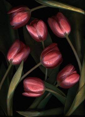 Magdalena Wasiczek close up of red tulips Flowers