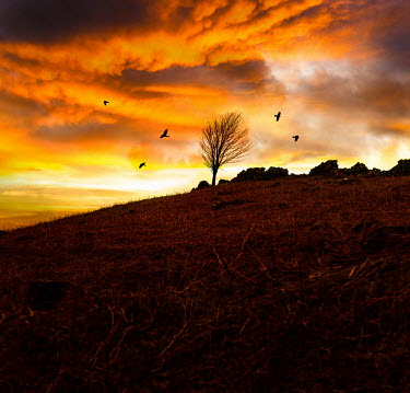Stephen Mulcahey TREE ON HILL AT SUNSET Fields