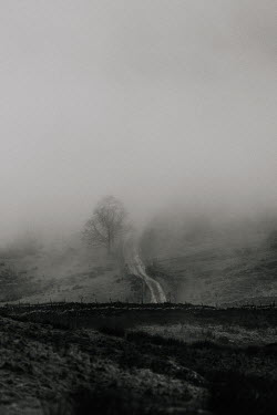 Rekha Garton Rural road with fog