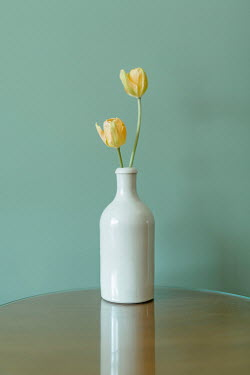 Shelley Richmond Yellow tulips in vase