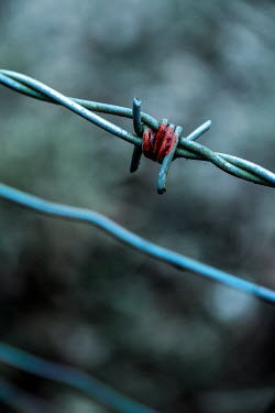 Stephen Mulcahey CLOSE UP OF BLOOD ON BARBED WIRE Gates