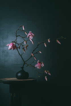 Magdalena Wasiczek pink magnolia branch in a vase indoors Flowers