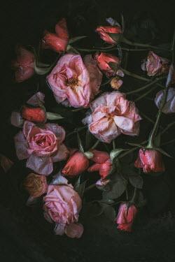 Magdalena Wasiczek pink roses floating in water Flowers