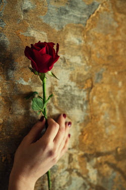 Mohamad Itani FEMALE HAND HOLDING ROSE BY WEATHERED WALL Women
