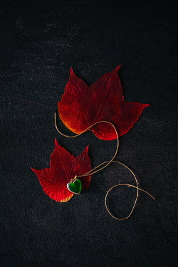 Magdalena Wasiczek heart-shaped necklace and two red leaves Miscellaneous Objects