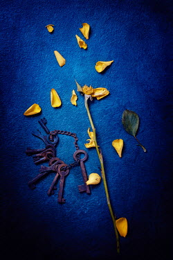 Magdalena Wasiczek scattered yellow rose and old keys Flowers