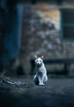 Ashraful Arefin WHITE CAT SITTING NEAR BUILDING Animals