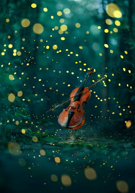 Ashraful Arefin VIOLIN AND BOW IN FOREST WITH SUNLIGHT Musical Instruments